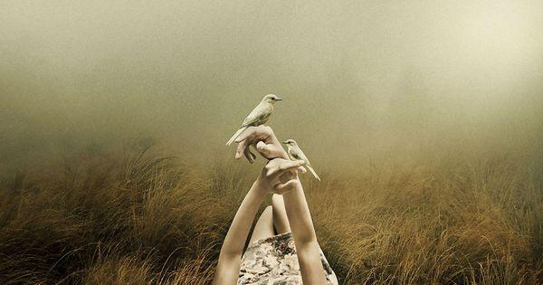 Mit dem Herzen wahrnehmen - Vögel sitzen auf der Hand einer Frau