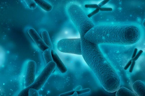 Einige Chromosomen