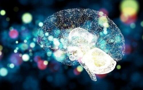 Ein beleuchtetes Gehirn