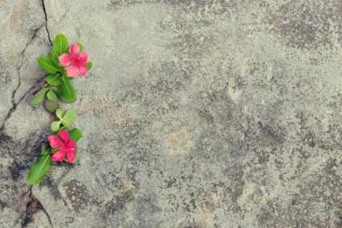 an Veränderungen anpassen - Blume auf Beton