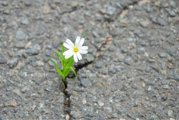 Orangen-Metapher - Blume wächst aus einem Stein