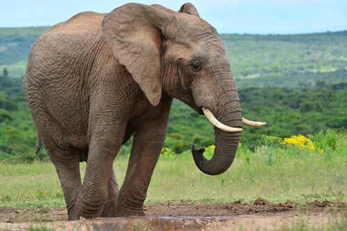 Die blinden Männer und der Elefant: Die Meinung anderer respektieren