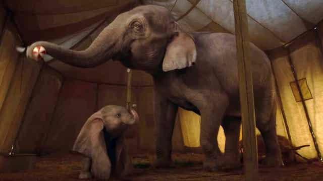 der Elefant Dumbo