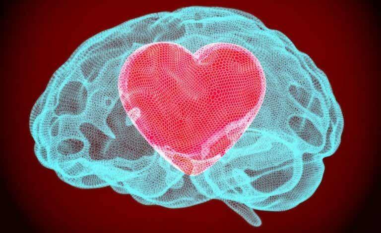 Neurobiologie der Vergebung: Wie sich das Gehirn verändert, wenn wir vergeben