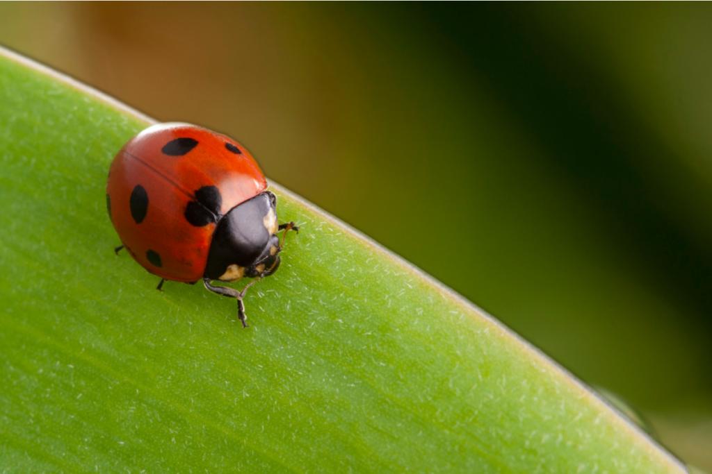 Fühlen Insekten Schmerzen?