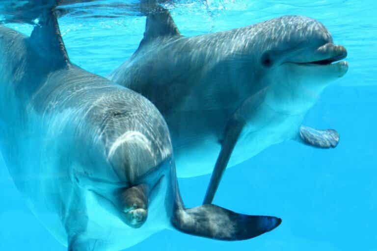 Tierische Intelligenz: Diese 15 Tiere sind besonders schlau!