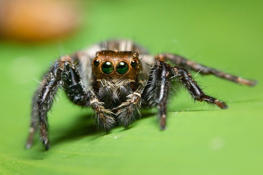 Phobien - Angst vor Spinnen