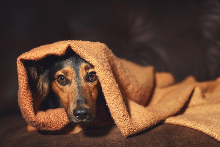 Phobien - Angst vor Hunden
