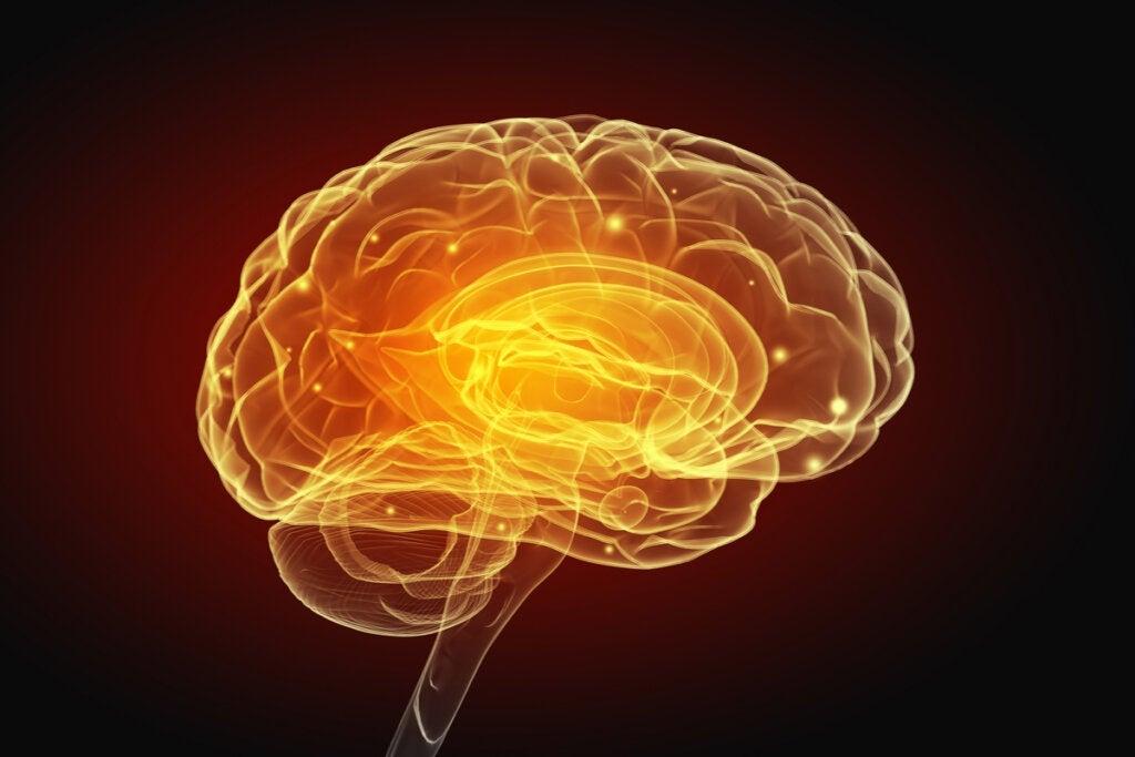 Egoismus und Altruismus verändern das Gehirn!