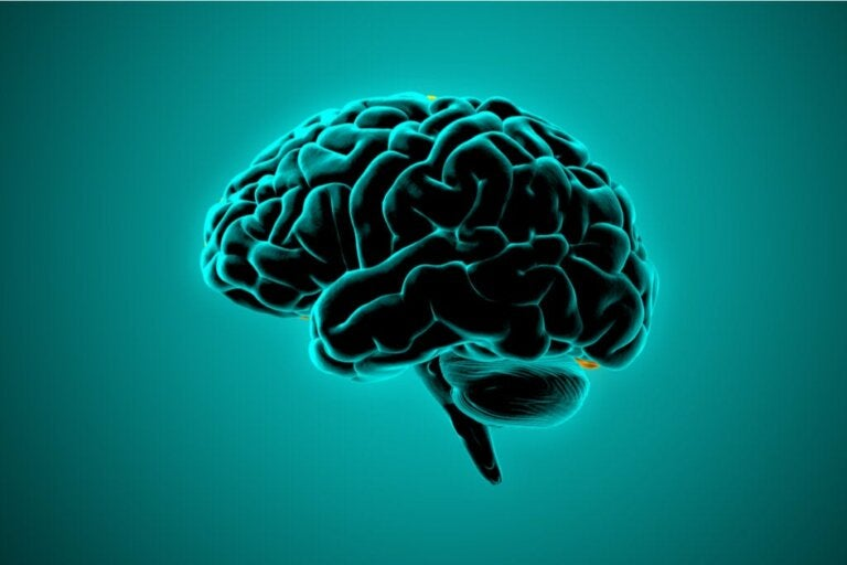 Neurowissenschaft: Wie tickt das Gehirn gewalttätiger Menschen?
