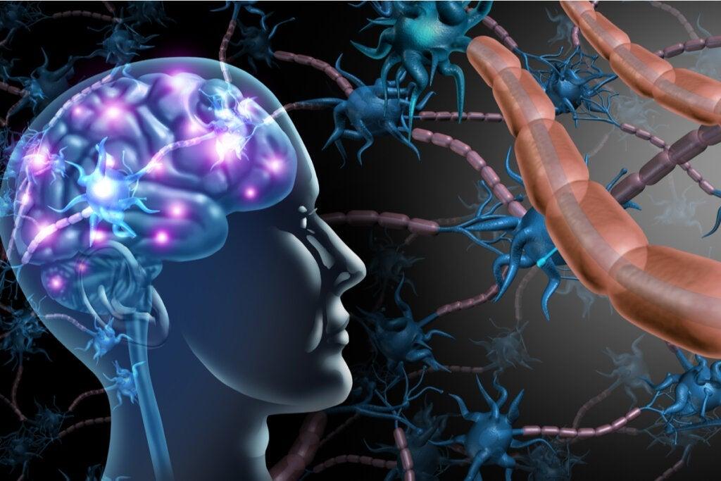 Amyotrophe Lateralsklerose und Multiple Sklerose: Was sind die Unterschiede?