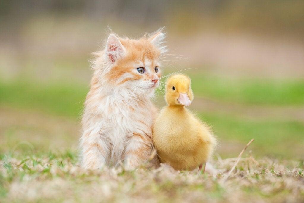 Tierische Freundschaft zwischen verschiedenen Arten