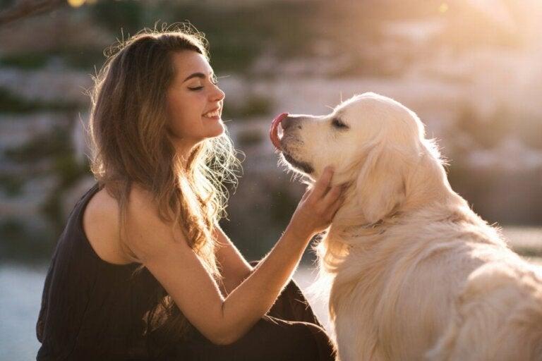 Eine Studie bestätigt: Dein Hund versteht dich!
