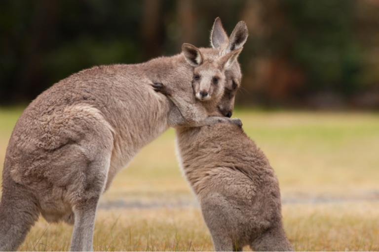 Tierverhalten: Umarmungen als Zeichen von Zuneigung?