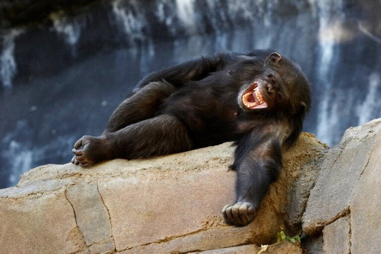 Haben Tiere Sinn für Humor?