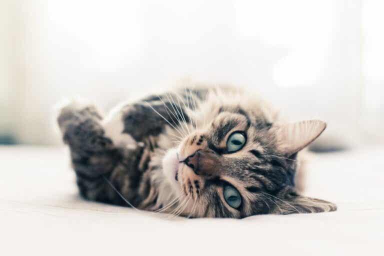 10 interessante Fakten über Katzen